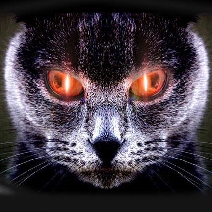 The Yule Cat.jpg